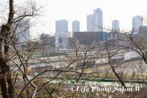 武蔵小杉方面の風景