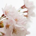 桜の季節・花の写真はRAWで撮ってみませんか?